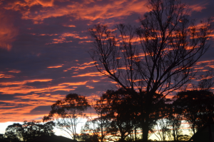 Landscape - Sunset over gum trees